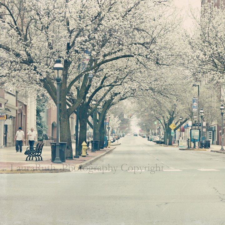 lauraruth_street